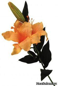 оранжевая или желтая лилия